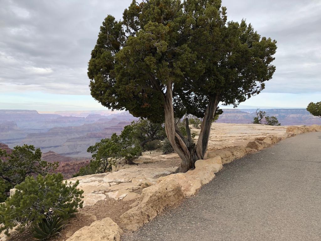 Rim Trail Grand Canyon