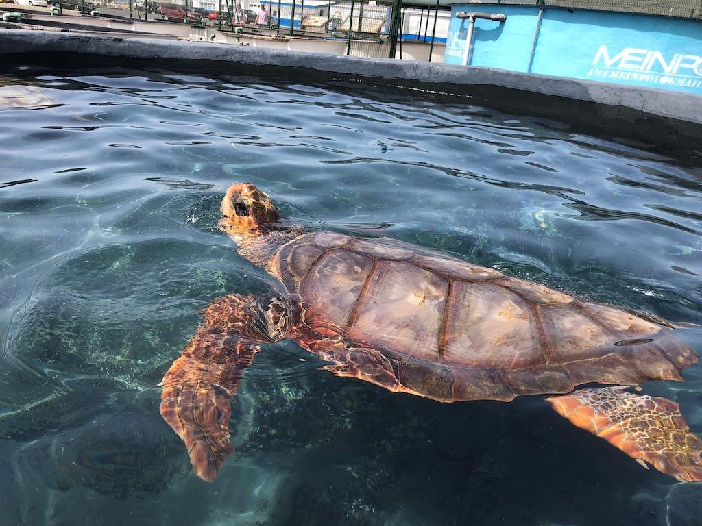 Turtle Nursery Morro Jable
